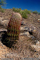 This photo of a cactus in it's natural surrounding as well as the following seven photographs were all taken in 'South Mountain Park' which has nearly 17,000 acres of rugged desert mountain terrain. Phoenix, AZ. 'Nikon F100 35mm SLR' (Click for larger view)